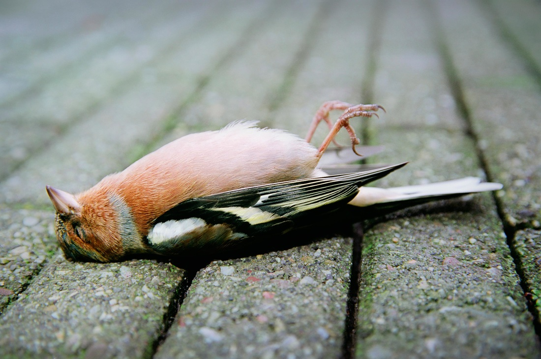 Plants and Animals - Air Pollution Air Pollution Effects On Animals Pics